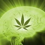 Cannabis stops seizure